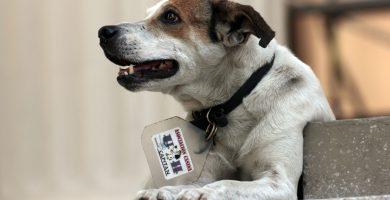 Decreto Ley de Bienestar Animal