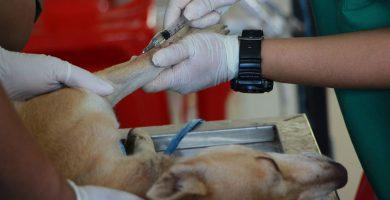 Productos veterinarios: todo lo que debes saber para entrarlos y sacarlos de Cuba